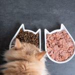 Resep Olahan Makanan Kucing Sederhana Tapi Enak